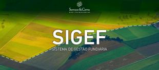 sigef_232.png